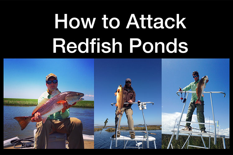 How to Attack Redfish Ponds in Louisiana